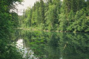 Памятник природы «Радоновые источники и озера у деревни Лопухинка» (фото Н.М. Алексеевой; www.ooptlo.ru)