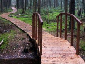 Деревянный пешеходный настил экомаршрута (фото из архива Дирекции)