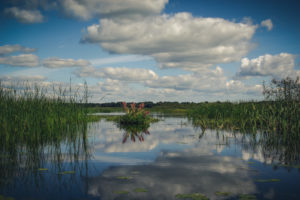 Государственный природный заказник «Раковые озера» (фото С.Н. Кузнецова; www.ooptlo.ru)