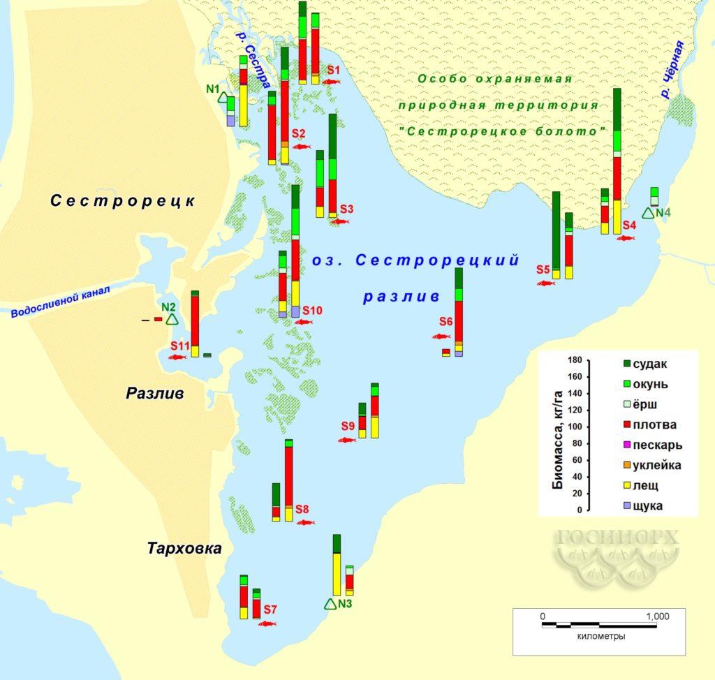 Рисунок 7. Распределение биомассы рыбы на акватории Сестрорецкого Разлива по данным контрольных съемок (левый столбик – осень 2015-го, правый – весна 2016 года; для станции №4 – только весна 2016-го).