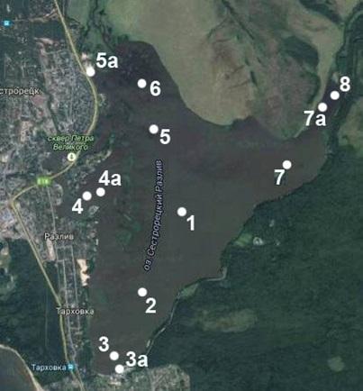Рисунок 2. Расположение станций отбора проб зоопланктона и зообентоса на оз. Сестрорецкий Разлив