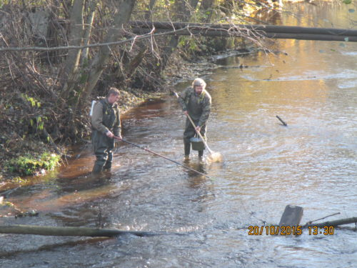 Рисунок 5. Проведение контрольного лова на реке Черная с использованием ранцевого электроловильного аппарата