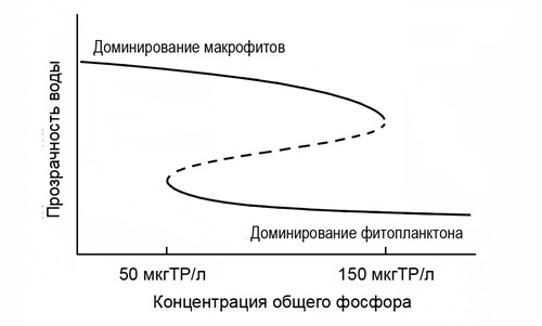 Рисунок 8. Концептуальная модель зависимости прозрачности воды от концентрации в ней общего фосфора в мелководных озерах при смене гидробиологического режима, в котором основным продуцентом является фитопланктон, на гидробиологический режим, где основным продуцентом выступают макрофиты (из [14])