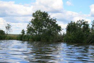 Рис. 1Б. Сплавинный тип берега на севере Сестрорецкого Разлива: низменный торфяной затопленный тип