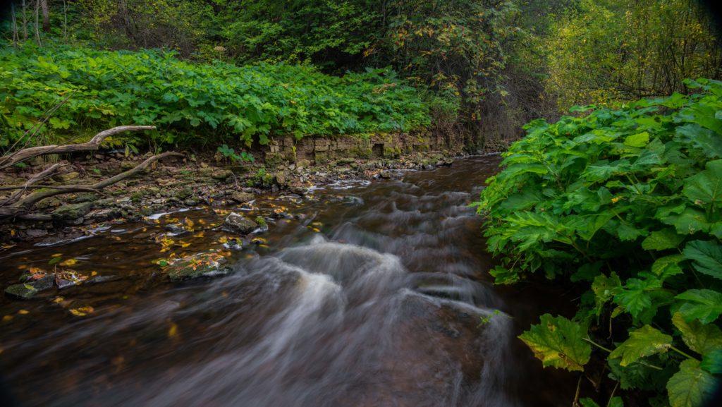 Долина реки Поповки, заросшая борщевиком