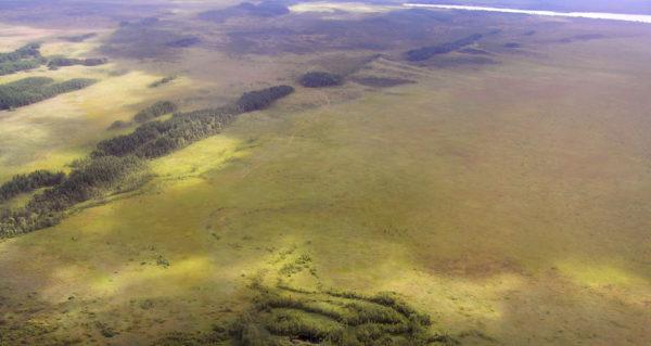 А. Древние облесенные дюны на болоте (фото Д.П. Маякова-Зеньковича)