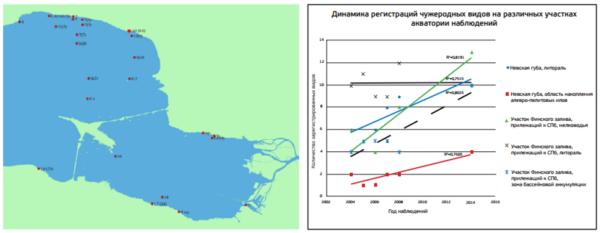 Рисунок 1. Акватория ведения мониторинга чужеродных видов и тенденция к росту числа регистраций чужеродных видов с течением времени в сообществах основных подводных ландшафтов акватории в период с 2004-го по 2014 год По материалам [11]. А – сетка станций ежегодных наблюдений; Б – межгодовая динамика регистраций чужеродных видов.