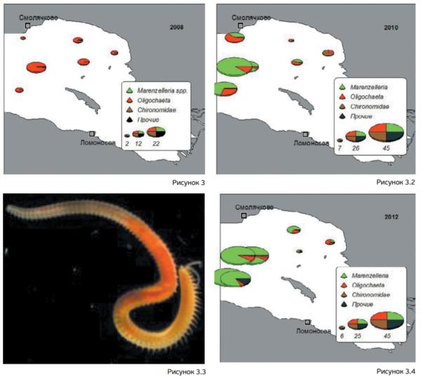 Рисунок 3. Экспансия чужеродного вида по акватории восточной части Финского залива в период с 2008-го по 2012 год на примере малощетинковых червей Marenzelleria arctia из [11]