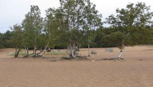 Рисунок 4. Эоловое разрушение дюн (Курортный район)