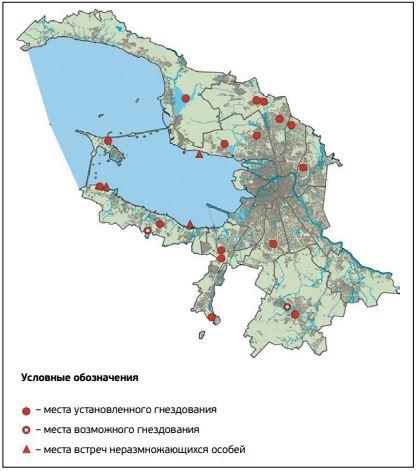 Распространение красношейной поганки в Санкт-Петербурге
