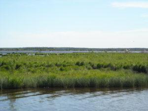 Места гнездования птиц на мелководье Разлива