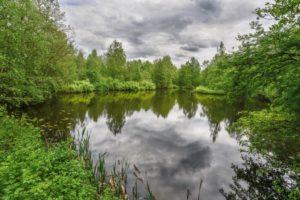 Петровский пруд. Фото А.В. Ладыгина