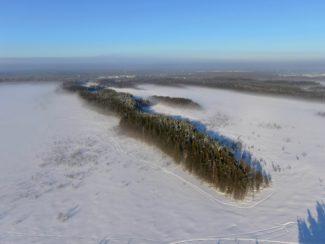 Вид на поросшие сосновым лесом древние дюны. Фото Д.Д Мухаметшина
