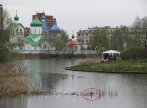 Водоем в парке Городов-Героев (красным обведено гнездо с насиживающей кладку птицей). Фото Н.П. Иовченко