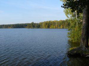 Озеро Щучье. Фото А.В. Ладыгина