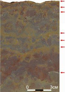 Рисунок 14. Несколько сближенных поверхностей уплотненного дна в известняке толщи «дикарей» помечены стрелками. Пришлифованный образец