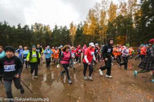 Фестиваль «Акула скандинавской ходьбы» в парке Сосновка – участвуют все!